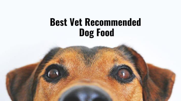 Best Vet Recommended Dog Food