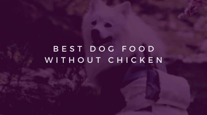 Best Dog Food without Chicken