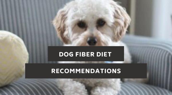 Dog Fiber Diet Recommendations