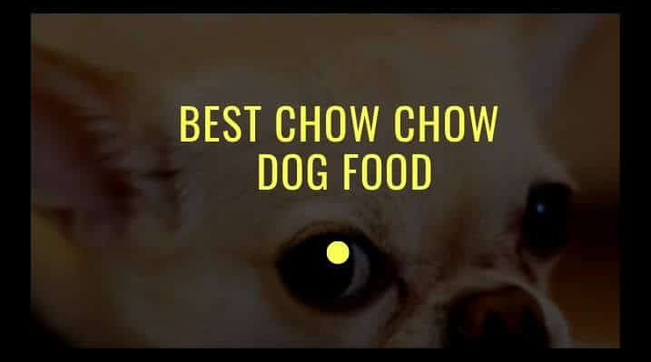 Best CHow Chow dog food