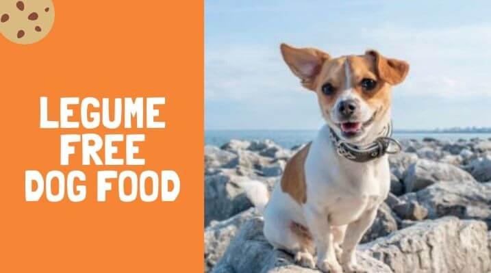 legume free dog food