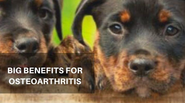 Big Benefits for Osteoarthritis