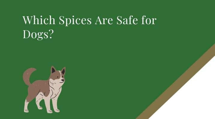 Which Spices Are Safe for Dogs?