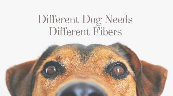 Different Dog Needs Different Fibers