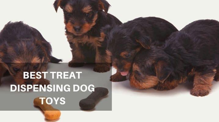 Best Treat Dispensing Dog Toys
