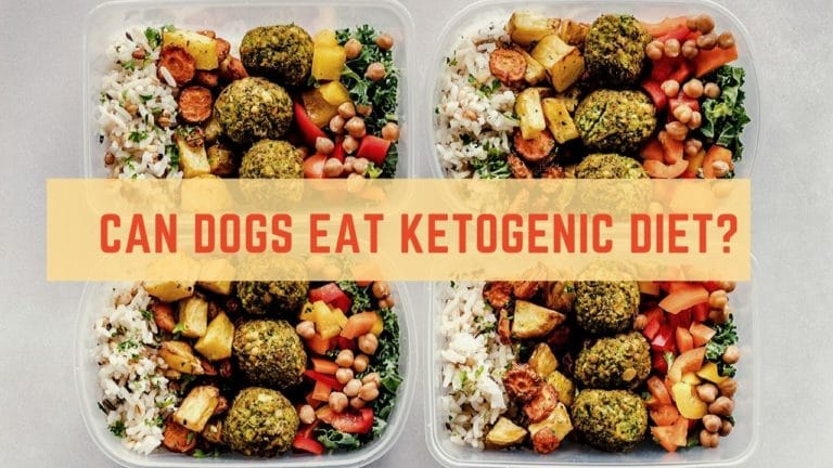 Can Dogs Eat Ketogenic Diet